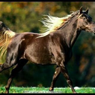 壁纸 动物 马 骑马 320_320