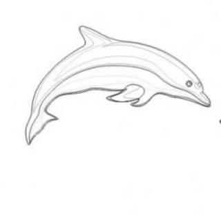 海豚手绘画图片