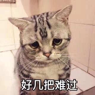 壁纸 动物 猫 猫咪 小猫 桌面 320_320