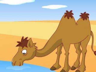 第31夜《爱美的小骆驼》园长妈妈