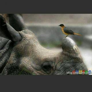 《有趣的动物共栖现象》