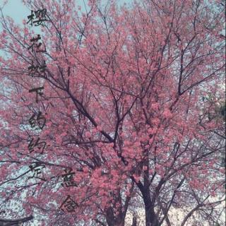 慈念- 樱花树下的约定