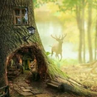 树屋式动物观测