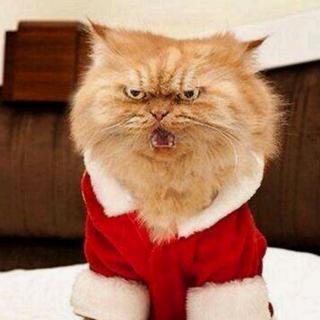 动物叫声08 大猫猫生气