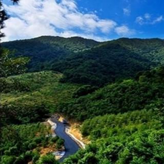 China fija una meta de desarrollo forestal para 2050
