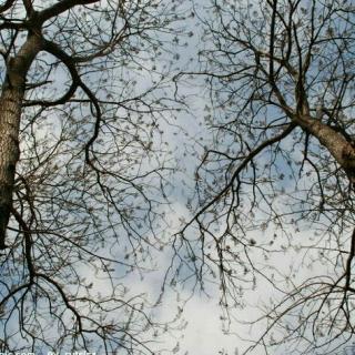 梧桐枯树 ps素材