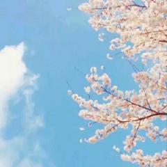 你曾这样问我+樱花樱花想见你 — 16err