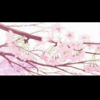 清明樱花祭简谱_さくら 清明樱花祭