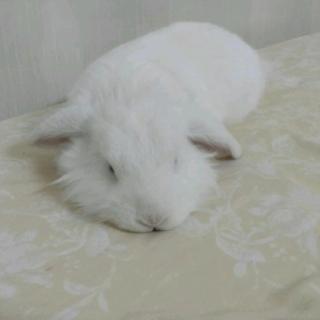 大兔子和小兔子