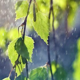 雨水 · 雫のおと - 梶迫小道具店