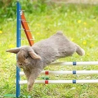 微信动物头像伤心兔