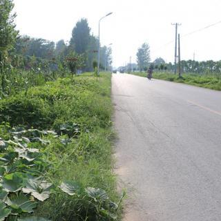 El condado Lankao saca frutos de la mejora del transporte