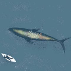 用心说 | 化身孤岛的鲸鱼