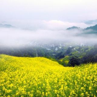Apreciar lo bello de la naturaleza para darle la bienvenida a la primavera,赏繁花迎