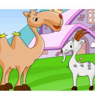 【故事371】《骆驼与兔子》喜洋洋幼儿园睡前故事