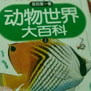 [动物世界大百科]我的第一套上/会盖房子的海洋贝类