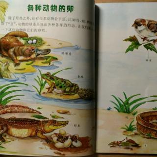 动物百科【各种动物的卵】