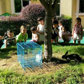 菁华滨江幼儿园睡前故事--小猴子种树