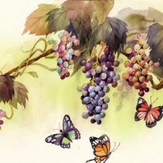 野葡萄图片