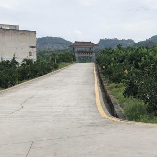 Transformación de industria agrícola ayuda a la construcción ecológica de Yangtze