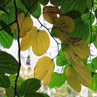 Puro Chino:Comienzo del otoño 立秋(lìqiū)