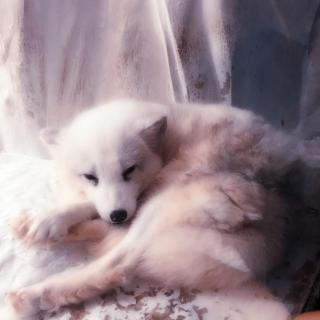 【流行】白狐-黄钰棕