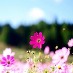 春天,耳朵开出一朵花