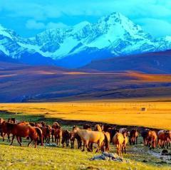 我和新疆有个约定 第一集 一亩田