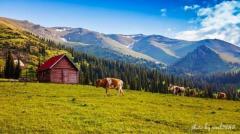我和新疆有个约定 第七集 一亩田