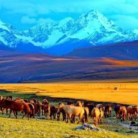 我和新疆有个约定 一亩田 游记