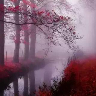 我闻见风中的雾气