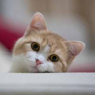 团子是什么动物图片