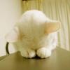 《小男宠的幸福生活》【猫猫熊&心外无物】