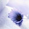 梦里开满梧桐花的纯白