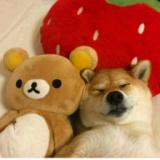 左熊右狗的冈特