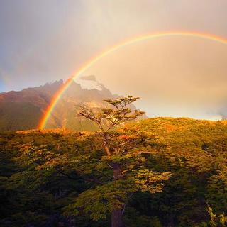 小白花和彩虹