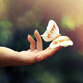 念一千遍蝴蝶-张嘉佳