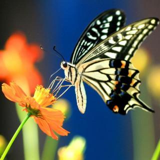 An insect I like - English writing