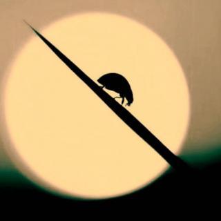内心的恶魔(深夜电台)NO:8-一只小甲虫