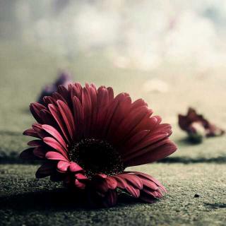 【听众投稿】《回忆里的人是不能见的》主播小花朵