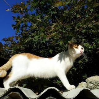 粤语版:名叫彼得的猫(文/村上春树 主播/何唱)