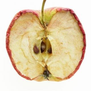 【奇妙的植物】Vol.2:为什么苹果放久了会变黄?