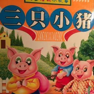 三只小猪🐷