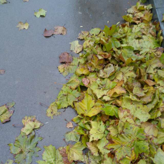 《流浪的叶子》文,碑林,路人。