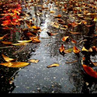 『话诗』致友人   彭千郡《秋天的雨》