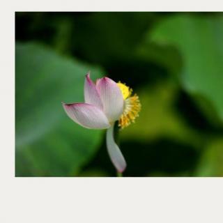 哲学故事:心灵的宁静     金河诵读