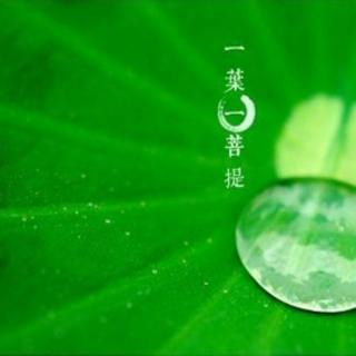 慧灯之光:佛法与现实 金河诵读