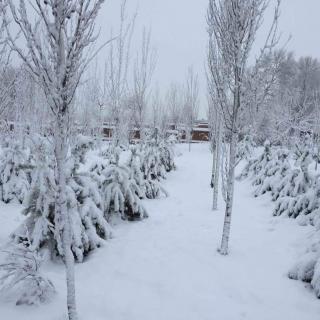 录音作业《第一场雪》