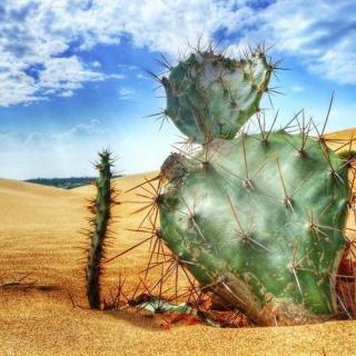 今夜有鬼第24弹:沙漠杀人事件