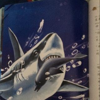海洋霸主鲨鱼第51到70页